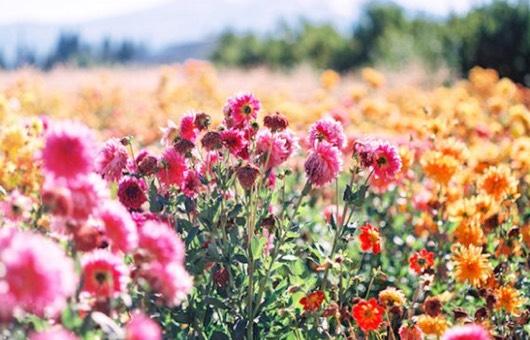 Flower Essences Course